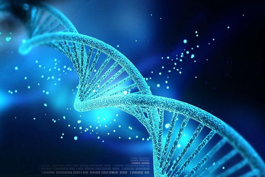 La déterminatination du patrimoine génétique grâce au prélèvement d'ADN